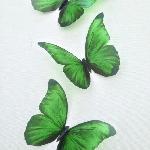 Deep Emerald Green in Flight 3D Wall Butterflies