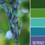 Colour Palette - Blue Buds