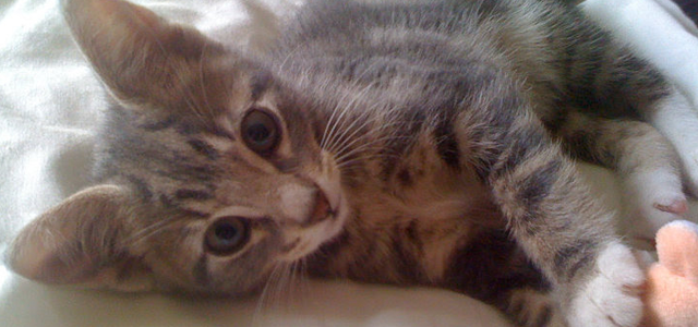 Furry Friends Tag -  Milo as a kitten